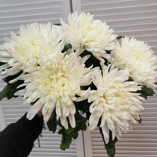 Ароматная хризантема 🥰