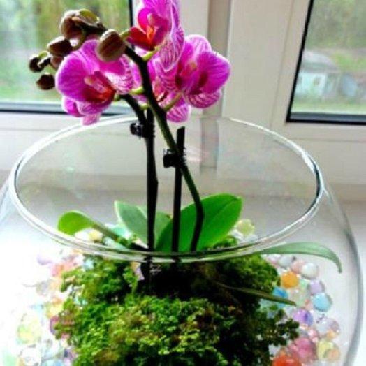 Орхидея в аквариуме: букеты цветов на заказ Flowwow