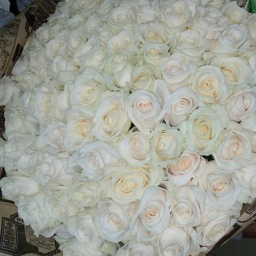 51 белая роза в крафте