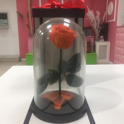 Роза в колбе оранжевая: букеты цветов на заказ Flowwow