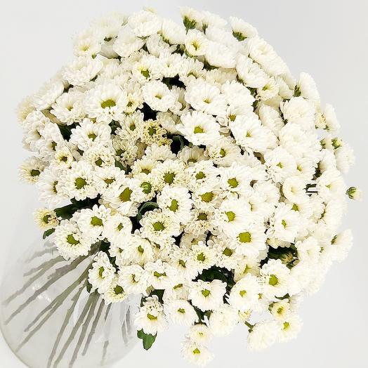 Белые ромашки 19