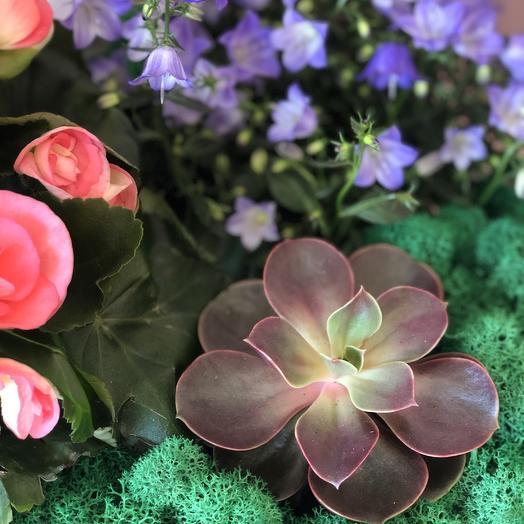 Композиция из горшечных растений «Яркая весна»: букеты цветов на заказ Flowwow