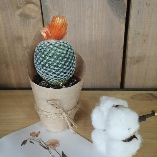 Кактус с цветком