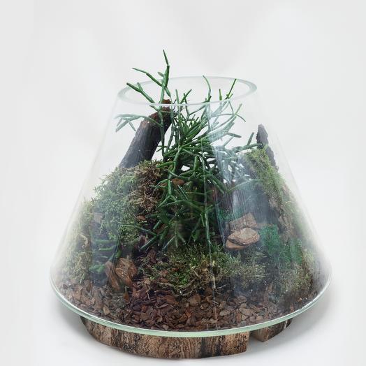 Флорариум рипсалис