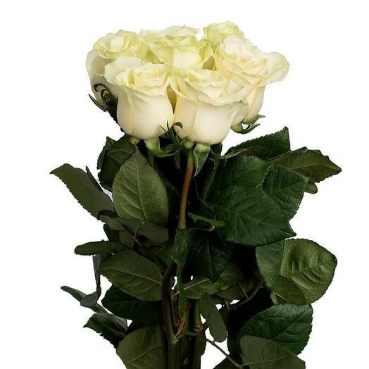 7 белых роз 70 см Эквадор