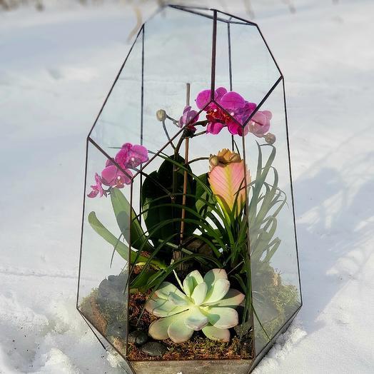 Флорариум с орхидеей: букеты цветов на заказ Flowwow