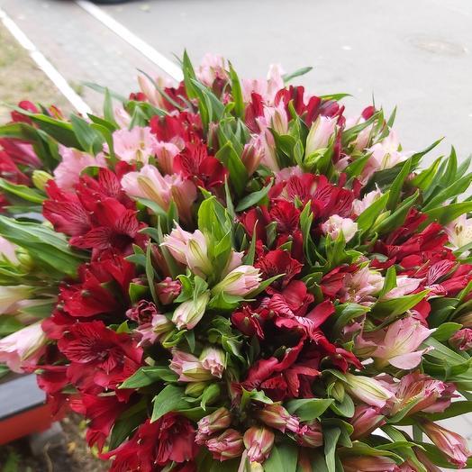 Альстромерия (мини букет): букеты цветов на заказ Flowwow