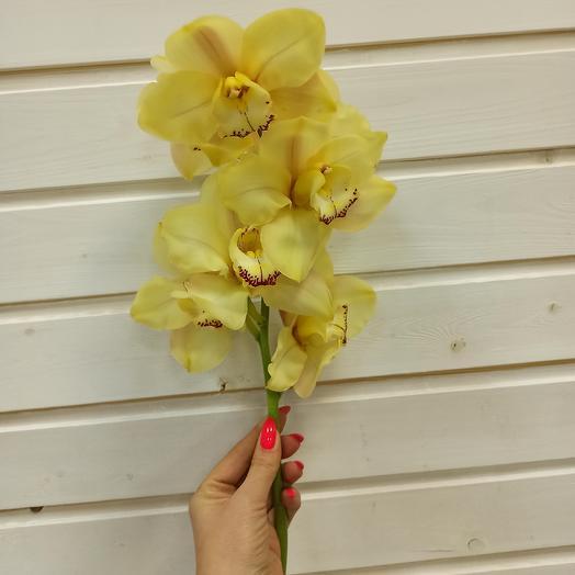 Орхидея ветка: букеты цветов на заказ Flowwow