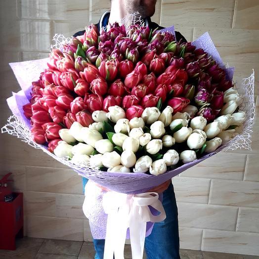 151 Пионовидный Тюльпан
