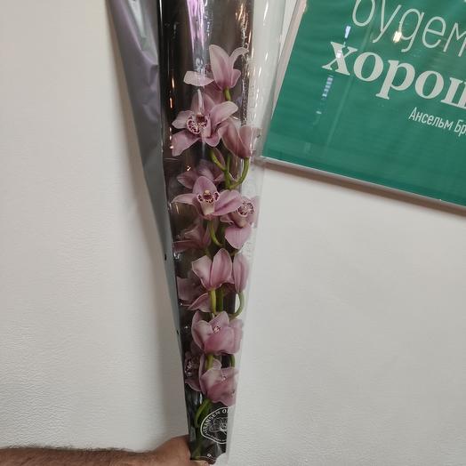Орхидея Цимбидиум гигант: букеты цветов на заказ Flowwow