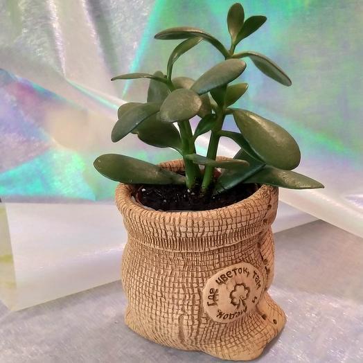 Денежное дерево в мешке (керамическое кашпо)