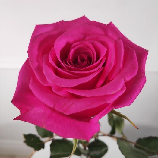 Крупная Розовая роза(коробка конфет в подарок, условие в описании)