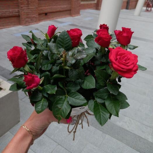 Роза садовая в дизайнерской упаковке