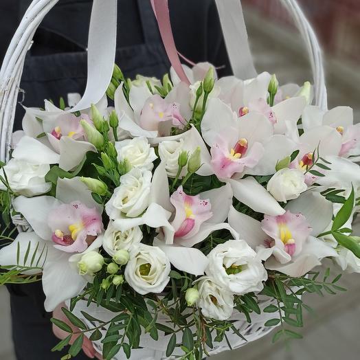Magic Orchid