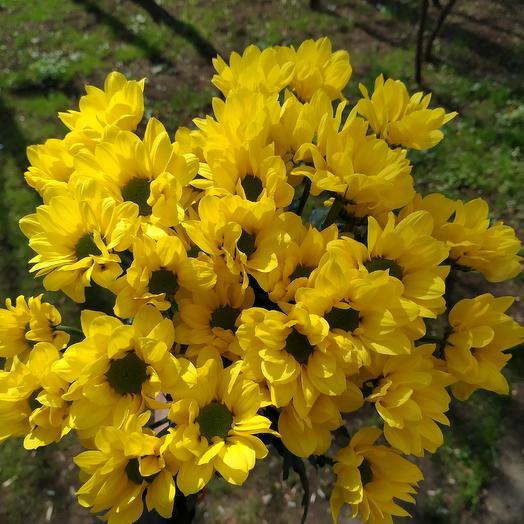Лапочка 1: букеты цветов на заказ Flowwow