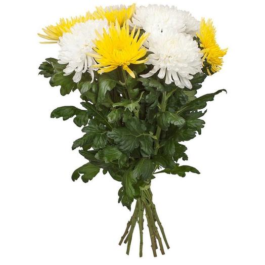 White and yellow single-headed chrysanthemums