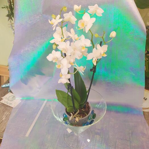 Нежная Орхидея в кашпо