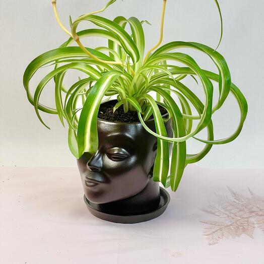 Кашпо голова с растением
