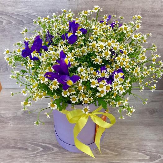25 Голландских ромашек в шляпной коробке: букеты цветов на заказ Flowwow