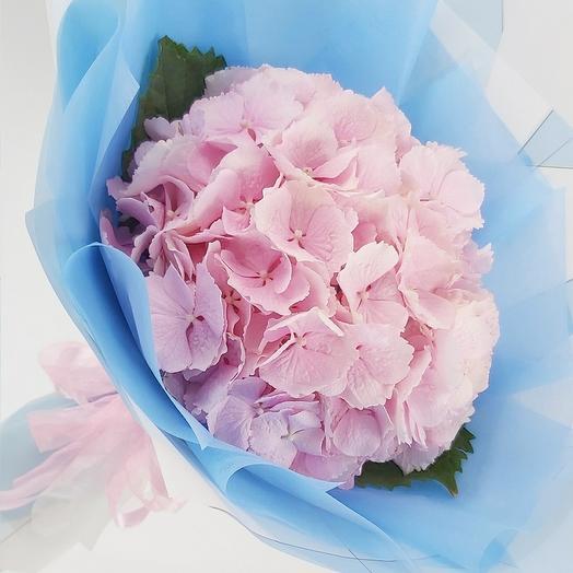 Розовая гортензия с оформлением