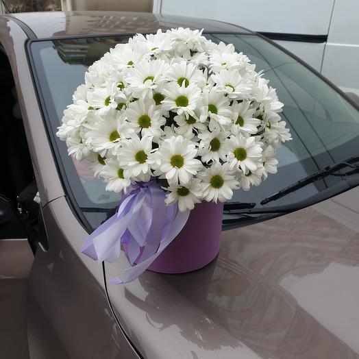 Chrysanthemum chamomile