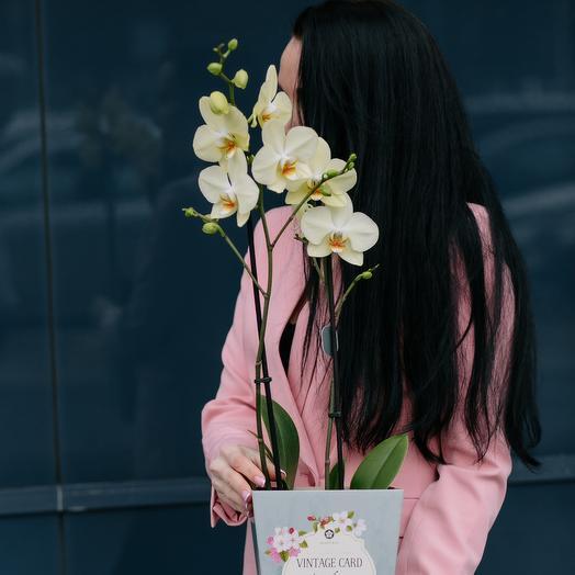 Орхидея в весенней коробочке