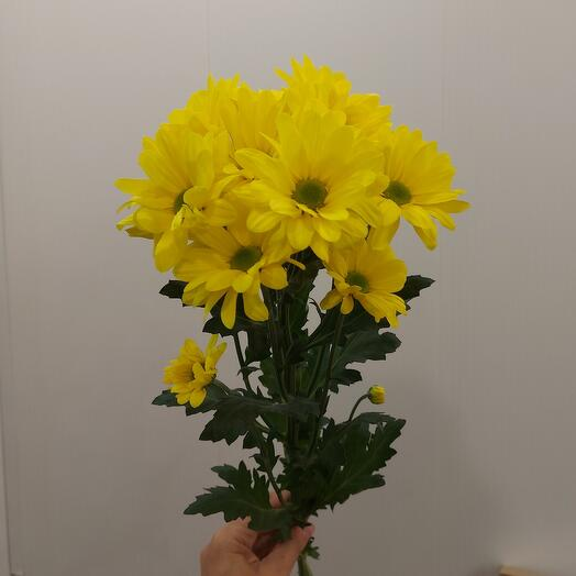 Хризантема кустовая в ассортименте, 1 веточка