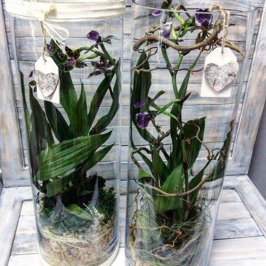 Орхидея в флорариуме