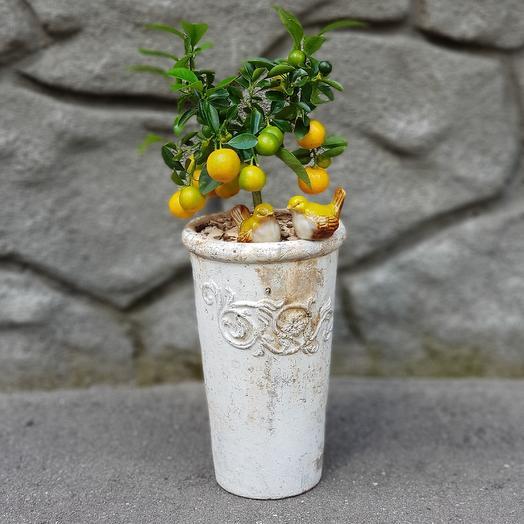 Солнечная Тоскана: букеты цветов на заказ Flowwow