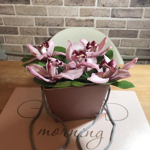 Коробочка с королевской орхидеей: букеты цветов на заказ Flowwow