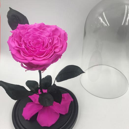 Ярко-розовая роза в колбе KING: букеты цветов на заказ Flowwow