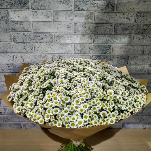 Букет из 51 белых Сантинии: букеты цветов на заказ Flowwow