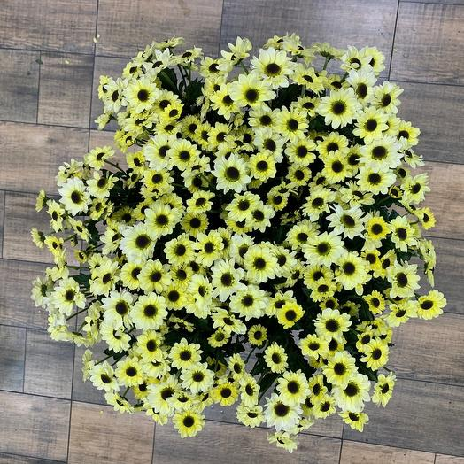 Хризантема Сантини: букеты цветов на заказ Flowwow