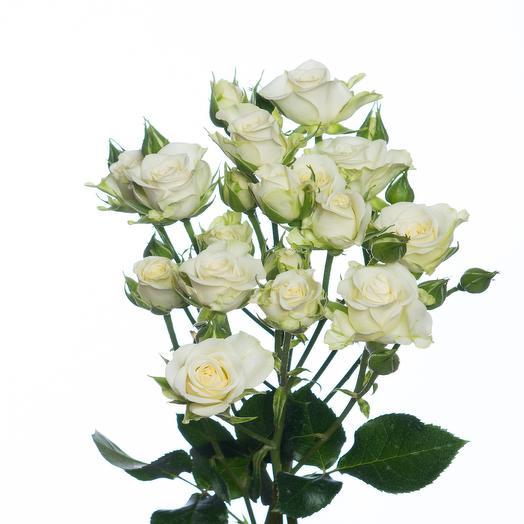 Кустовая роза сорта Сноуфлейк
