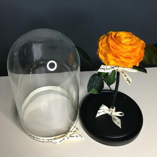Роза оранжевая в колбе (бутон до 12 см)