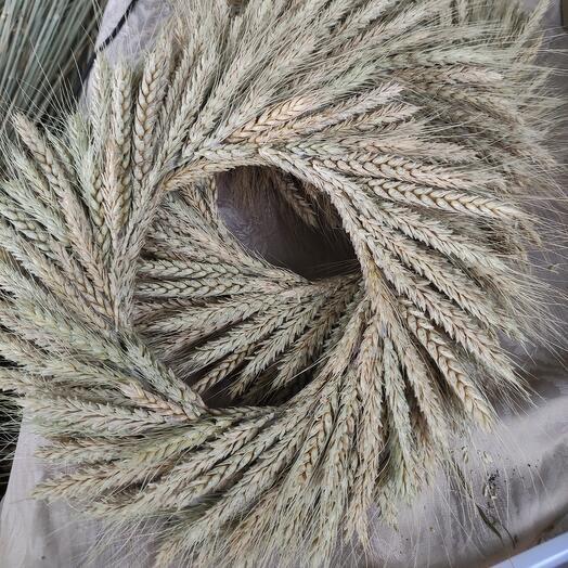 Венок из пшеницы на голову