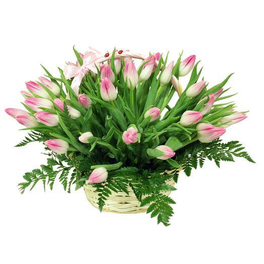 Розовое счастье (51 тюльпан)