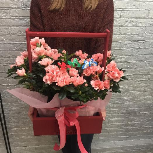 Азалия 2: букеты цветов на заказ Flowwow