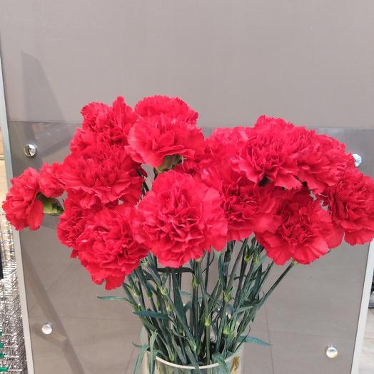 Красная гвоздика: букеты цветов на заказ Flowwow