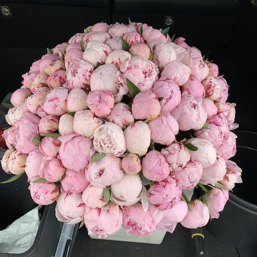 111 пионов: букеты цветов на заказ Flowwow