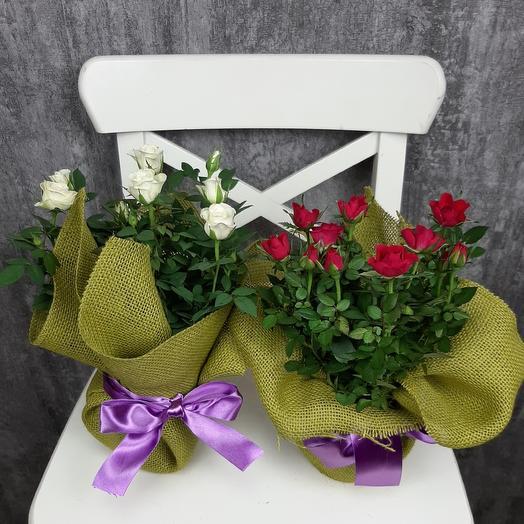 Чайные истории: букеты цветов на заказ Flowwow