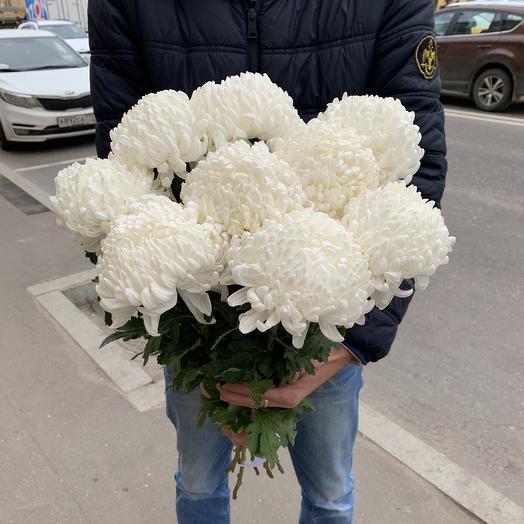 Букет из 9 белых шаровидных хризантем: букеты цветов на заказ Flowwow