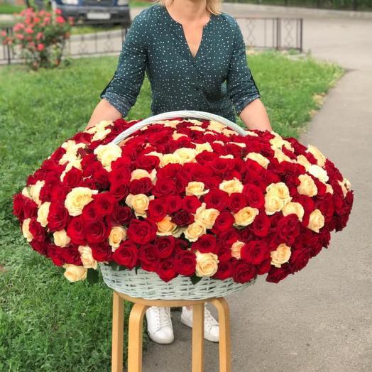 505 роз
