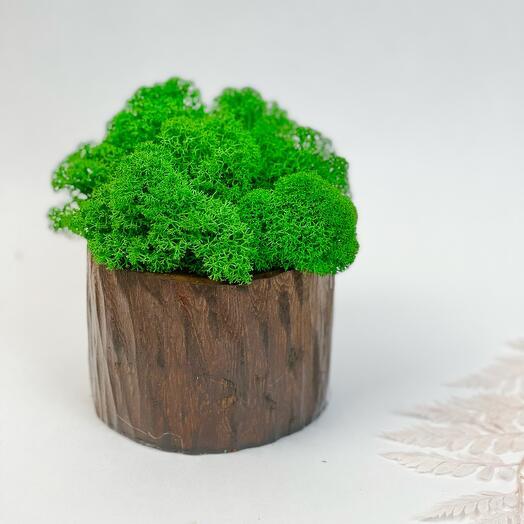 Пенёк деревянный