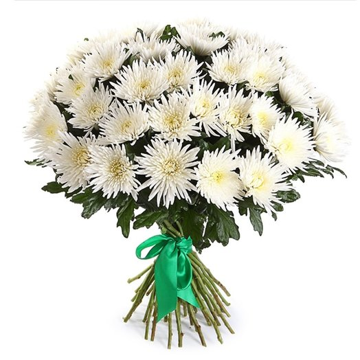 БЦ-160175 Белоснежные хризантемы: букеты цветов на заказ Flowwow