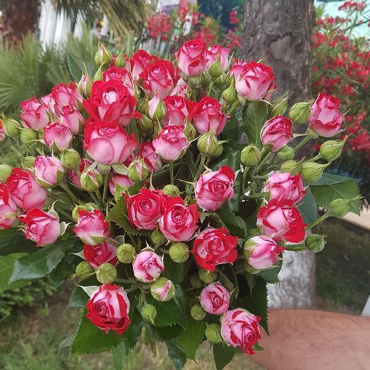 Би баблс: букеты цветов на заказ Flowwow