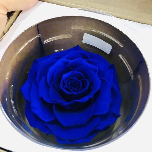 Стабилизированная роза: букеты цветов на заказ Flowwow