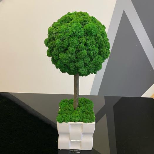 Вечнозелёное дерево М