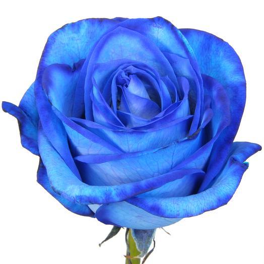 Синие розы из Голландии 60 см