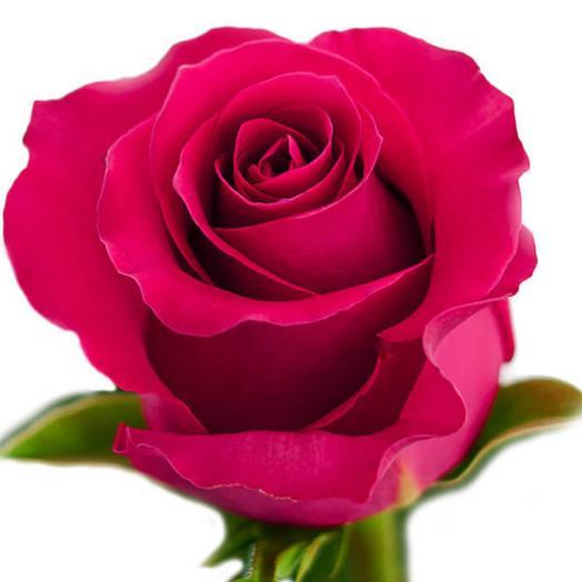 Роза Эквадор сорт Гоча 70 см